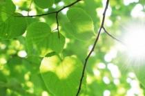 batterie_foglie