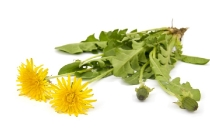two dandelions  isolated on white background