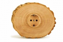 Cross section of tree trunk showing growth rings on white  background