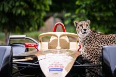 ds_techeetah_cheetahs_electric_motor_news_05