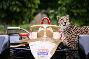 DS Techeetah with cheetahs