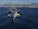 Williams Advanced Engineering e Oxis Energy barca elettrica